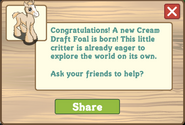 Cream draft foal message