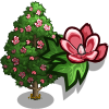 Chinese Tulip Tree-icon