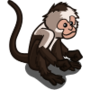 White Face Spider-Monkey-icon