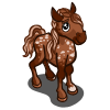 Bay Andalusian Foal-icon