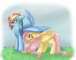 Fluttershy wing covering