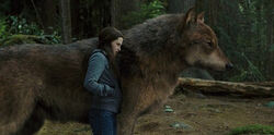 Bella-Jacob-Wolf-Eclipse-e1321074303695