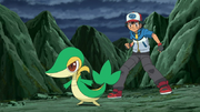 EP721 Snivy junto a ash