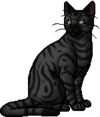 Darkstripe.warrior