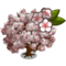 Yoshino Cherry Tree-icon