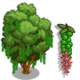 Macadamia Tree-icon
