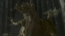 TreebeardatIsengard