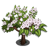 Giant Evergreen Pear Tree-icon