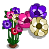 Anemone Full Bloom-icon