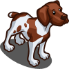Shorthaired Pointer-icon