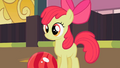 Apple Bloom looks at the pins S2E06.png