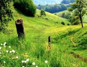3772772-landscape-with-green-hills-and-meadows
