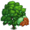 Candy Pecan Tree-icon