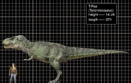 JP3 Tyrannosaurus: Subadult?  TRex-1-
