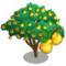 Quince Tree-icon