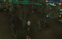 Emote clue Panic Haunted Woods