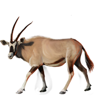Huge item gemsbok 01