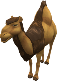 Cam the Camel