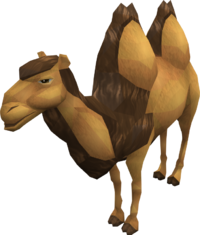Elly-the-camel