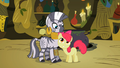 Apple Bloom flatters Zecora 2 S02E06.png