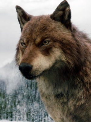 twilight jacob black wolf - photo #3