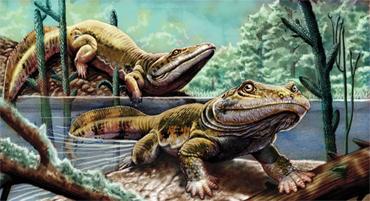amphibians like this Ichthyostega lived in the Paleozoic   DevonianDevonian Amphibians