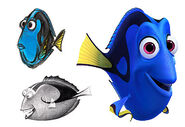 Chrs dory