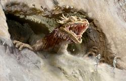 Canyonkraytdragon