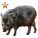 Item peccary bronze 01