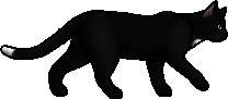 Ravenpaw.loner