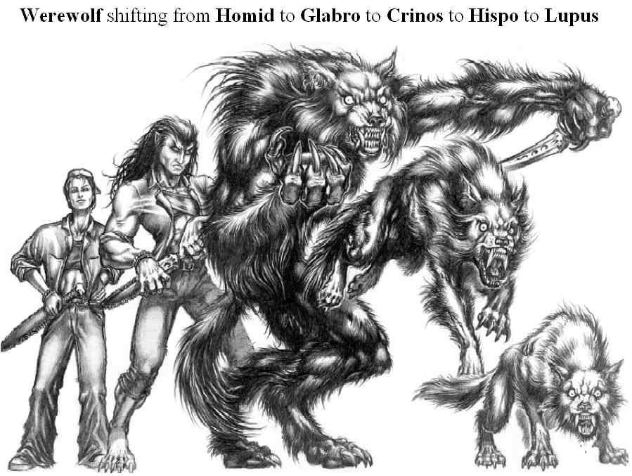 Formas de los Garou Werewolf5forms
