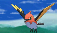Fletchinder Pokemon XY