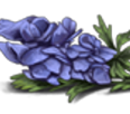 Aconite