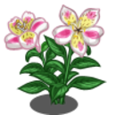 Alstroemeria Lily (Spring Basket)-icon.png