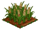 Australian Barley 100.png