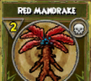 Red Mandrake
