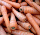Irish Carrots and Parsnips