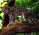Tree Ocelot (3.5e Monster)