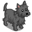 Grey Brindle Cairn Dog-icon.png