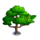 Trident Maple Tree-icon.png