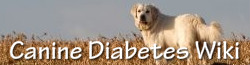 Canine Diabetes Wiki