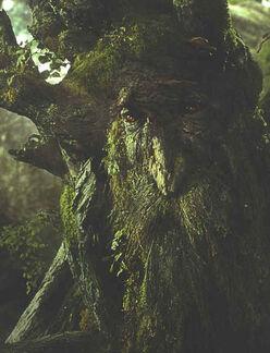 248px-Treebeard